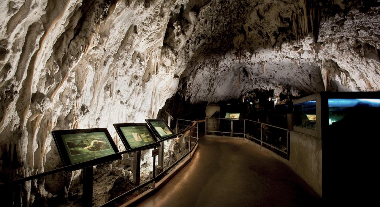 Postojna-Cave-Vivarium-Proteus-1