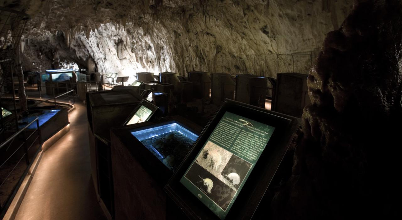 Postojna-Cave-Vivarium-Proteus-2