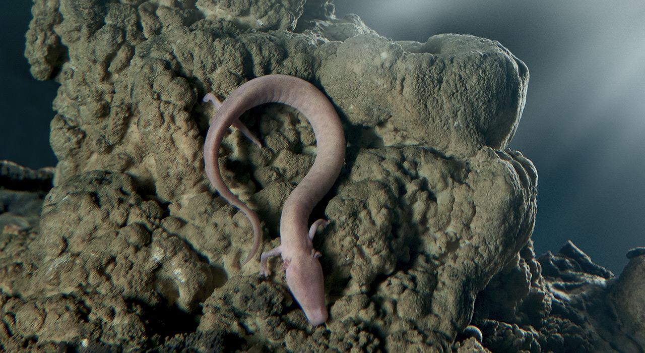 Postojna-Cave-Vivarium-Proteus-P-anguinus-1