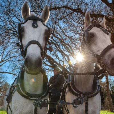 Attractions Lipica Horse Carriage
